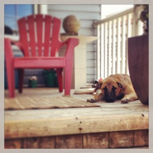 holly porch